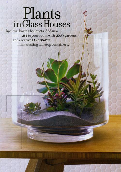 Glassplantr