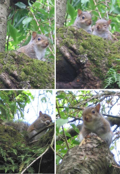 Babysquirrels