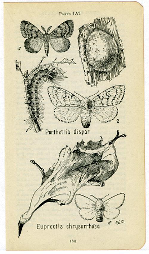 Moths2_2