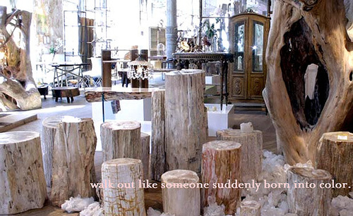 the furniture floor look at those amazing petrified tree stumps abcstumps - Tree Stumps For Sale