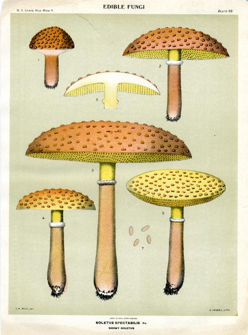 Mushrooms001