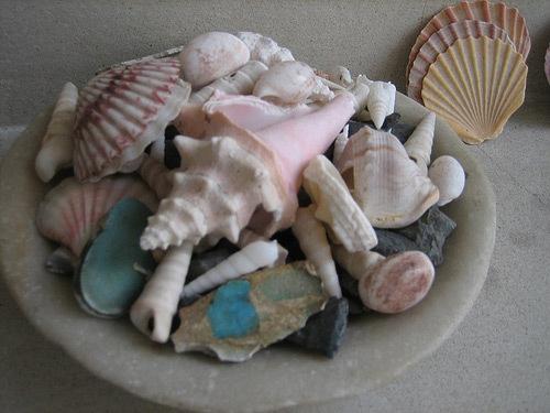 Shells_2