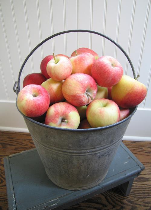 Applebucket