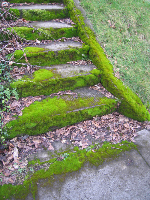 Mossy_steps
